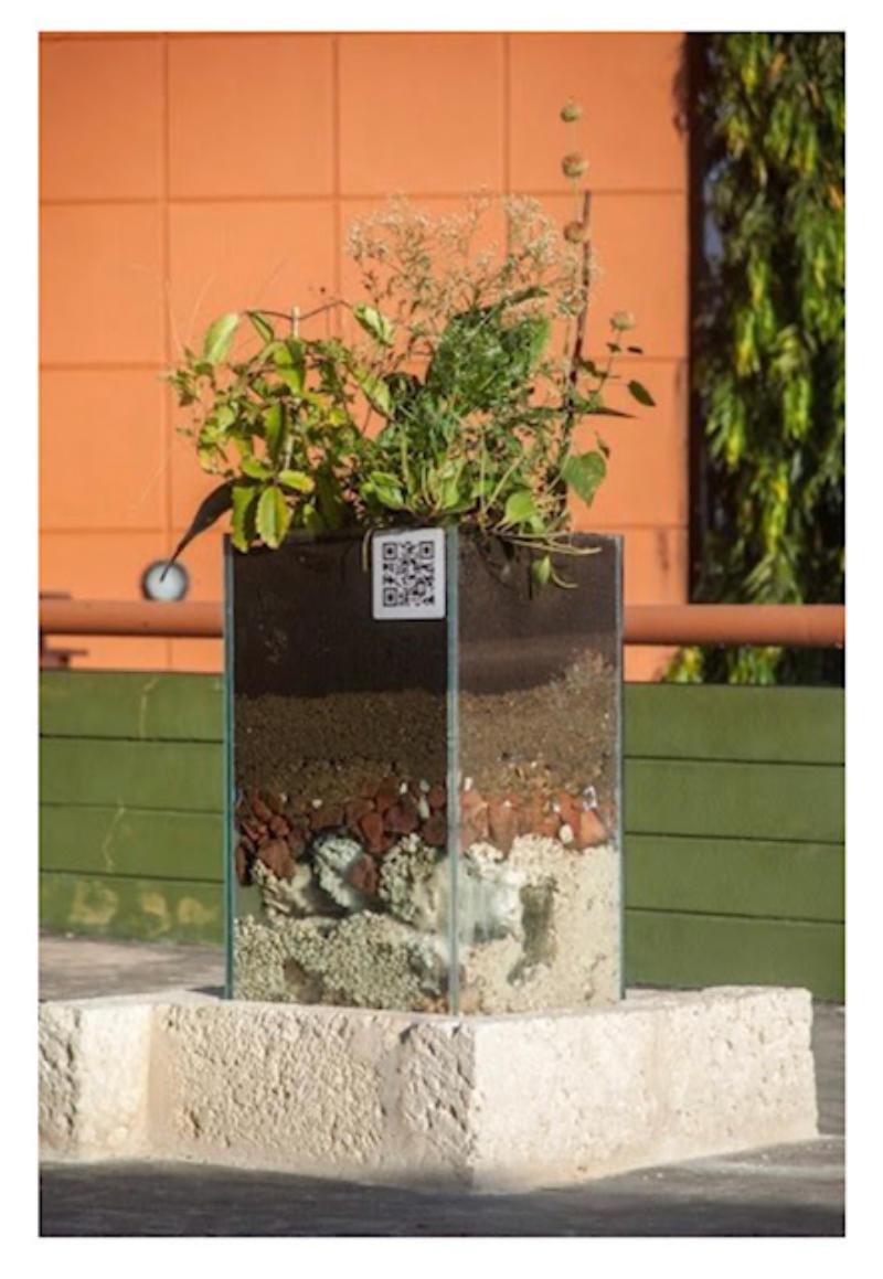 "(Bush) Tea Plots – A Decolonial Patch, sculpture by Annalee Davis, Glass vitrine 36"" x 20"" x 20"". limestone base 40"" x 28"" x 28"""